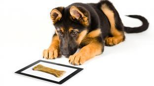 dog looking at picture of bone